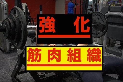 筋肉組織を強化するアルギニン